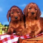 Kutyafelszerelés rendelés egyszerűen